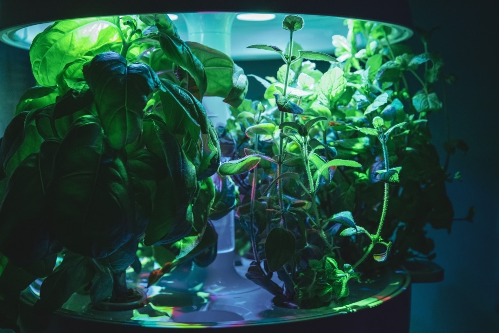 Plantui Smart Garden Plants Basil Oregano Mint 01