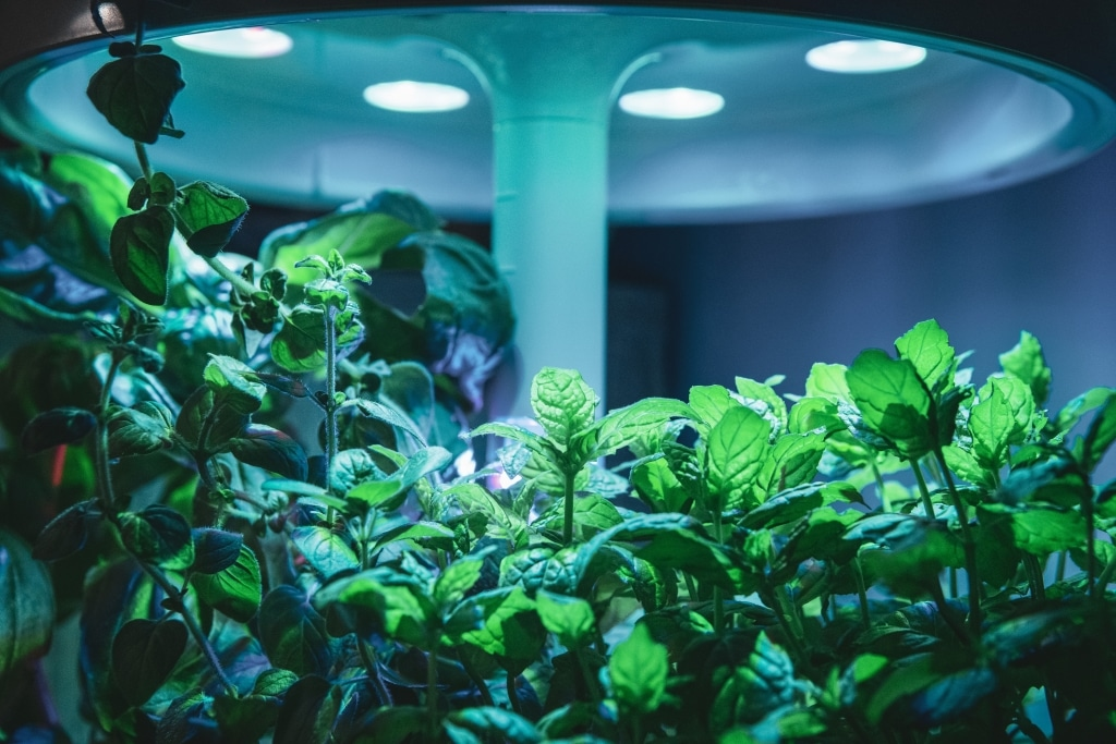 Plantui Smart Garden Plants Below Light Unit 03