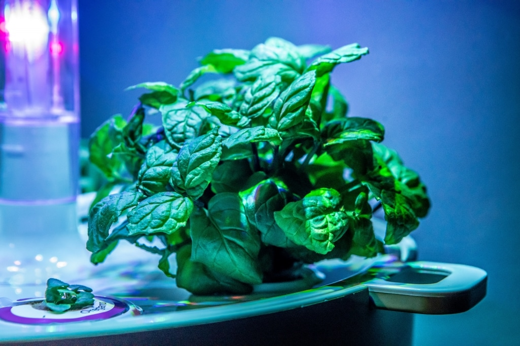 Plantui Smart Garden Plants Mint 01