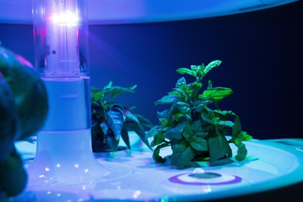 Plantui Smart Garden Plants Mint 03