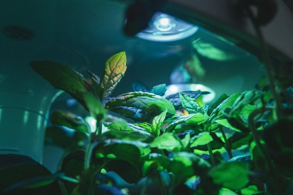 Plantui Smart Garden Plants Mint 04