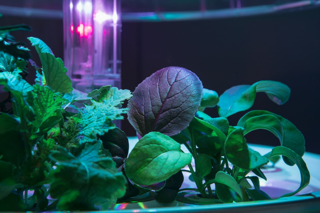 Plantui Smart Garden Plants Pok Choy Red Garden Rocket 01