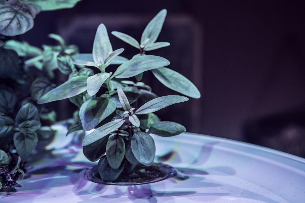 Plantui Smart Garden Plants Snapdragon 01