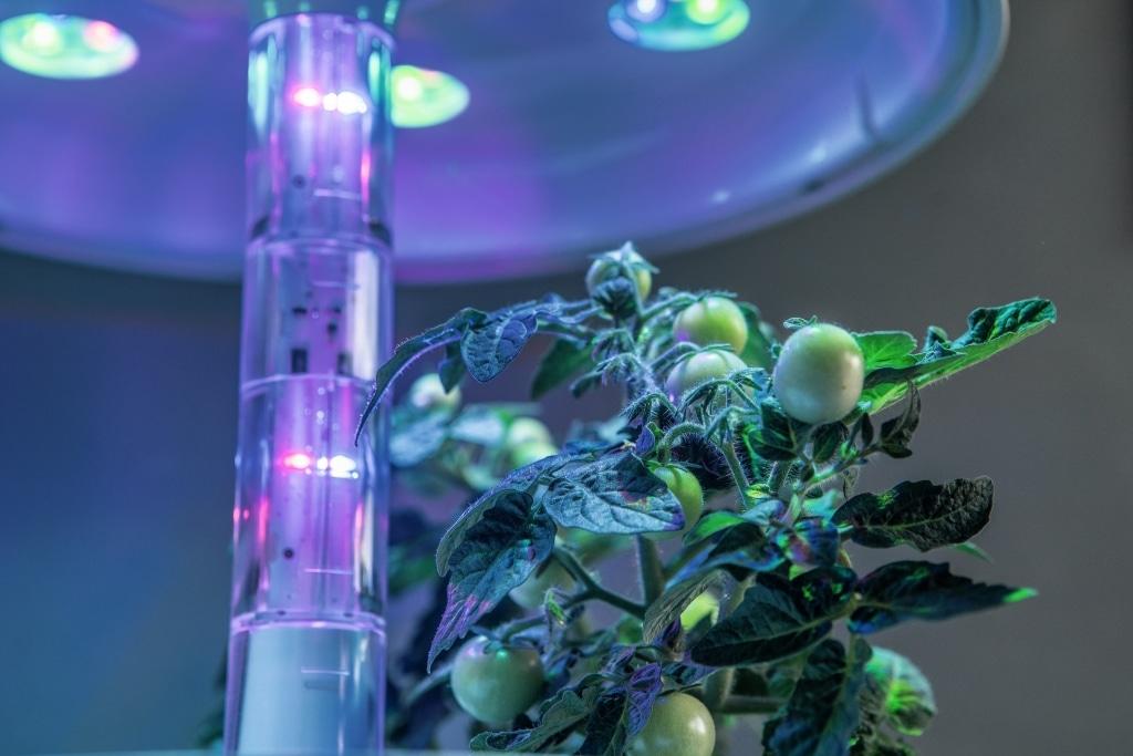 Plantui Smart Garden Plants Tomato 01
