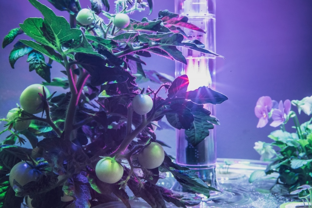 Plantui Smart Garden Plants Tomato 04