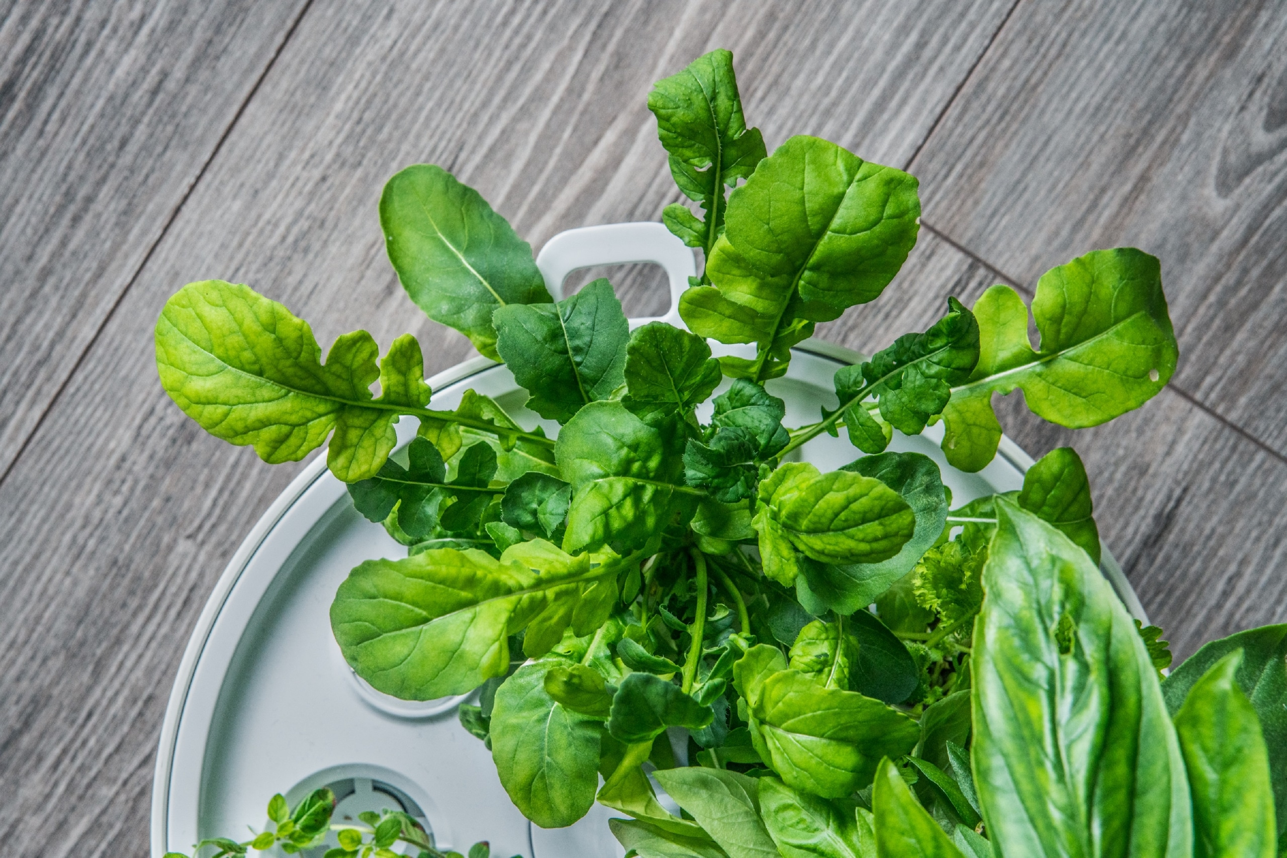 Plantui Smart Garden Rocket Salad 02 scaled