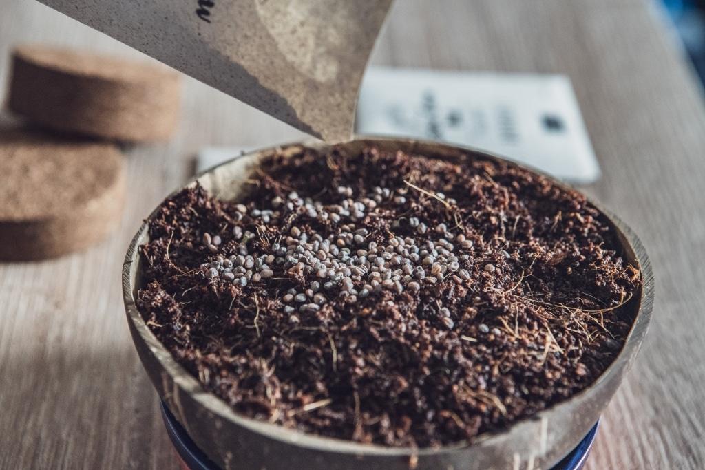 Grow Grow Nut Aussaehen 03