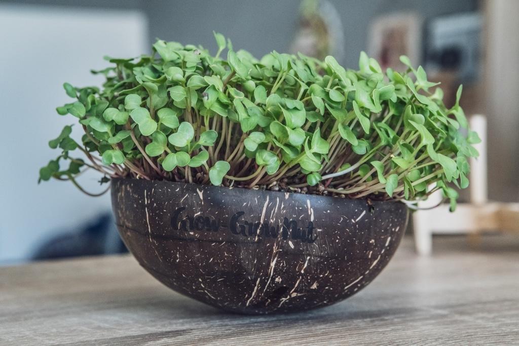Grow Grow Nut Brokkoli 10