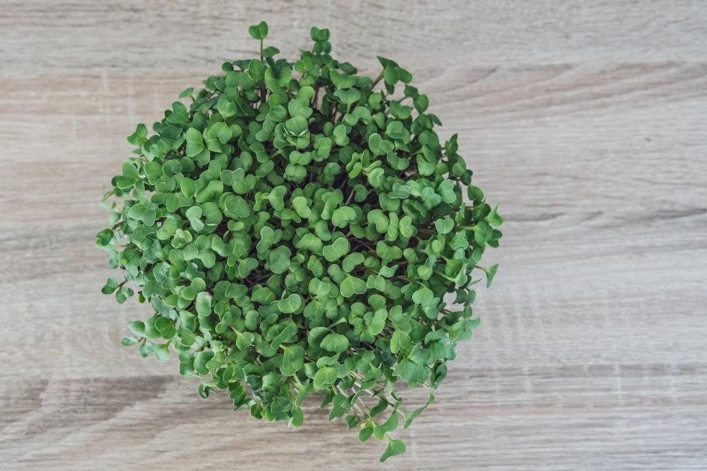 Grow Grow Nut Brokkoli 12