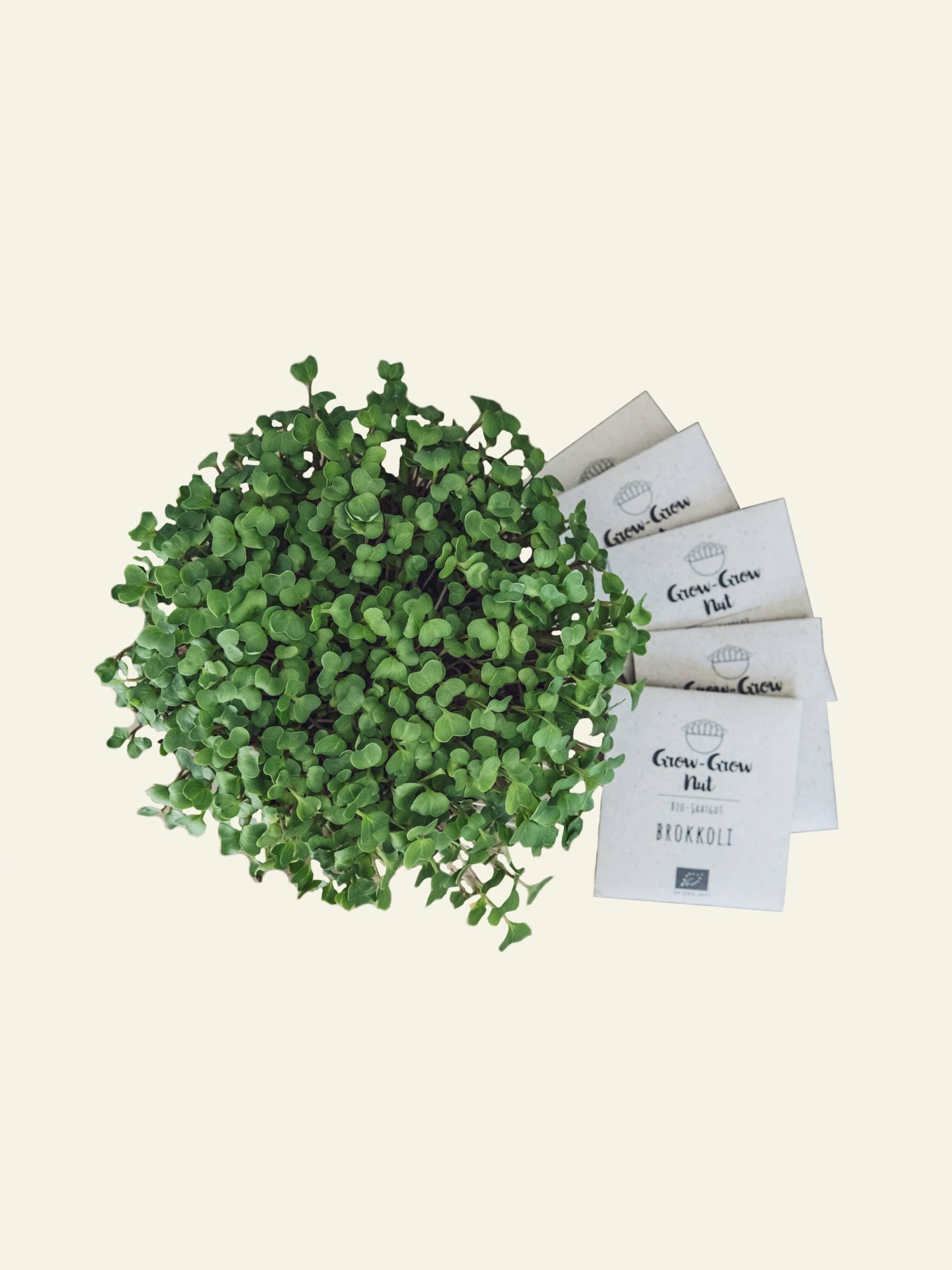 Grow Grow Nut Test Titelbild scaled