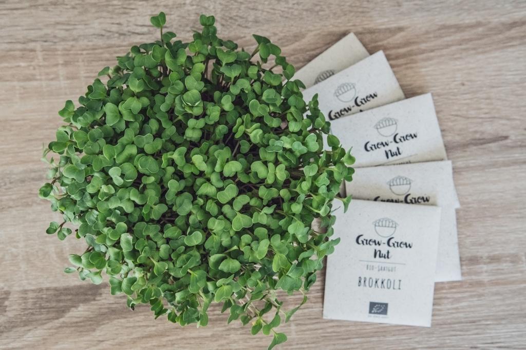 Grow Grow Nut Vermischtes 03